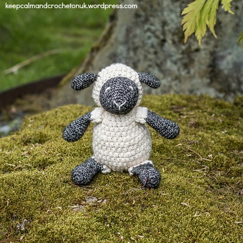 Little-Ewe-Outside