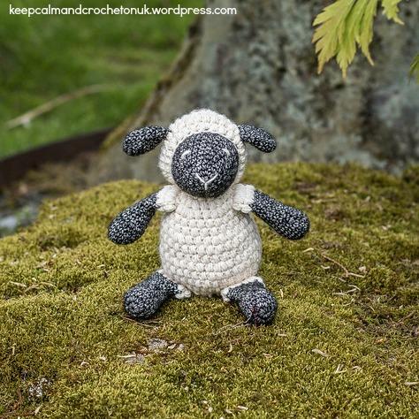 Little-Ewe-Outside